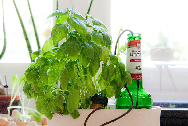 Planter elsker vand   byhaver