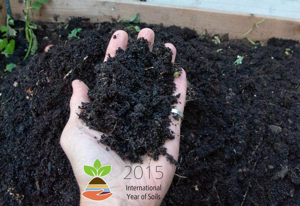 Internationalt jordbundsår