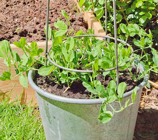 Kursus   dyrkning i potter   byhaver