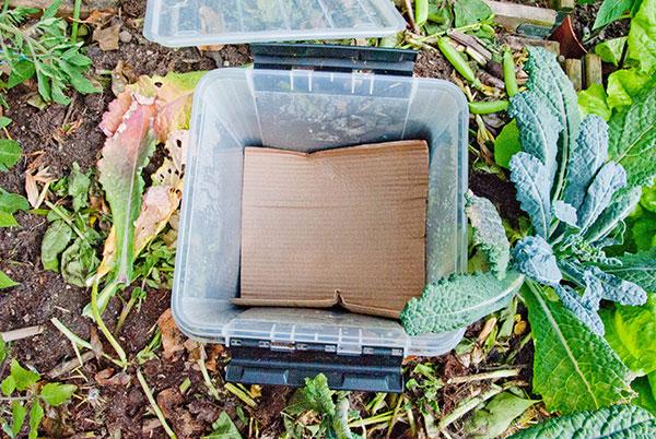 Madaffald i container gravet i jorden i et højbed