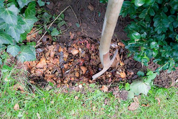 Bokashi graves ned i jorden