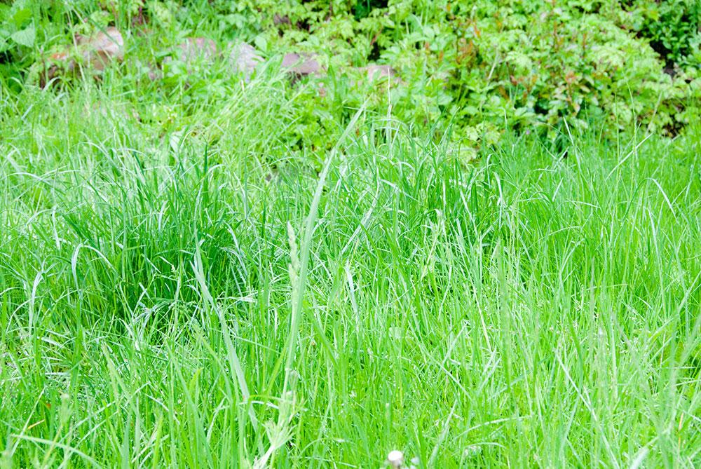 Græsplænen. Foto Maria Ehlert, Byhaver.dk