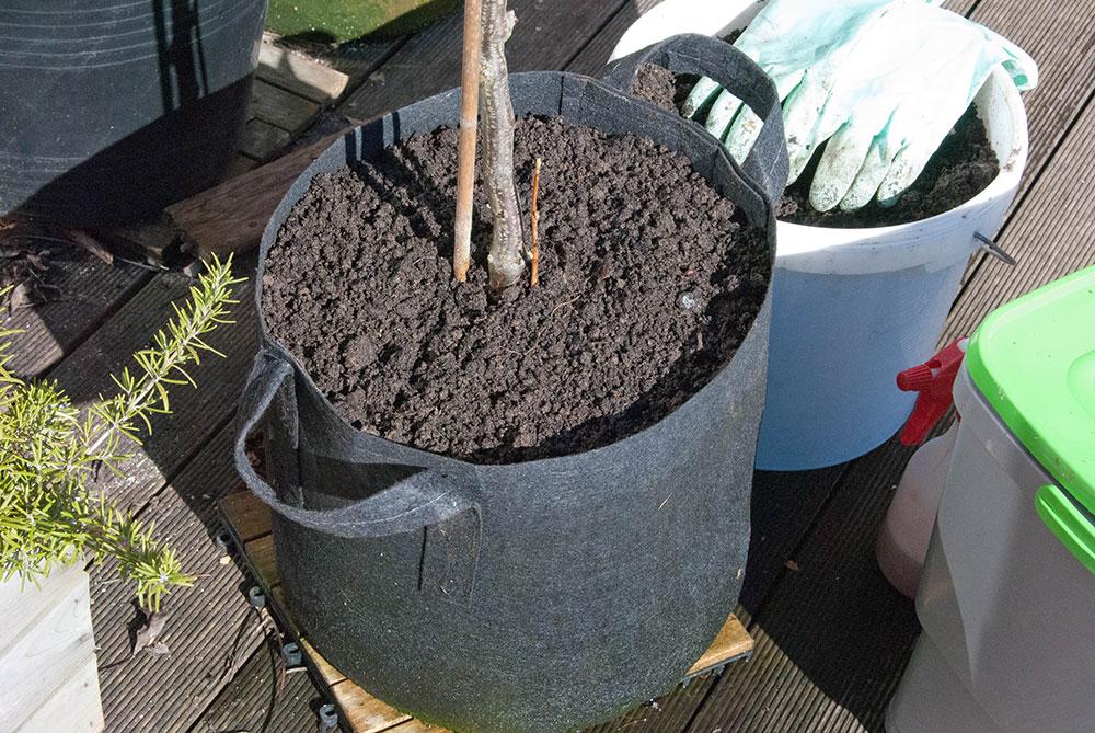 Solbærbusk med frisk bokashijord fra jordfabrik. Foto: Maria Ehlert, Byhaver.dk