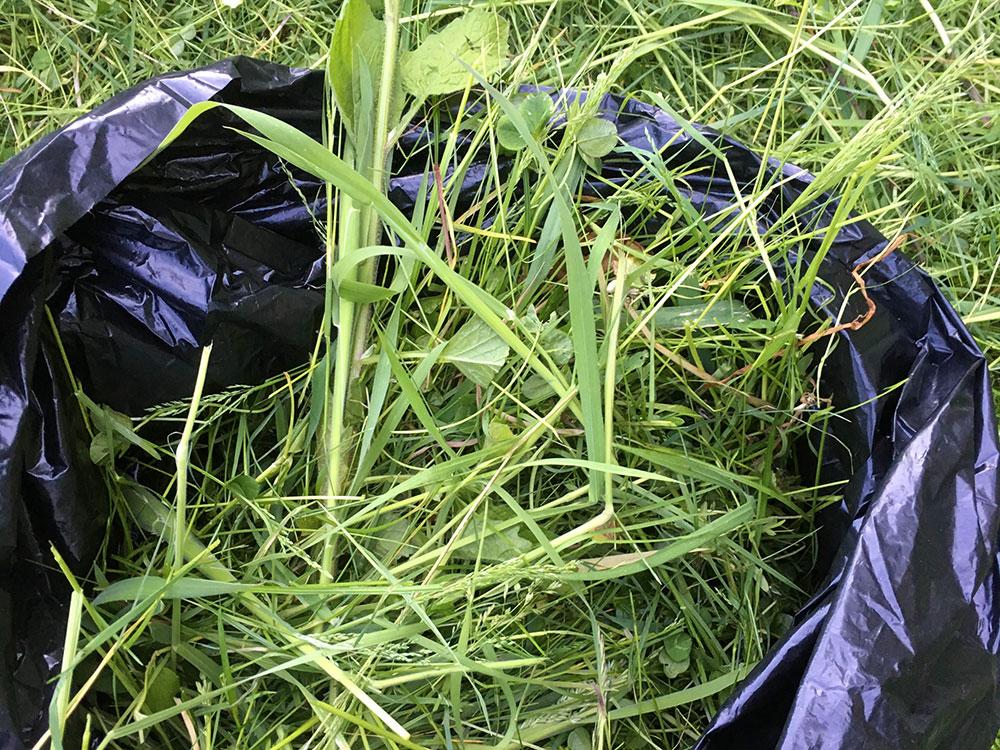 Bokashi af græs. Græs puttes i en sort plastiksæk