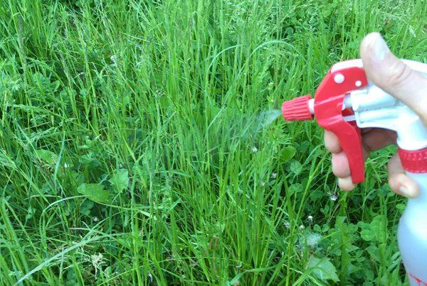 Spray med Have- og jordaktivator. Foto Maria Ehlert, Byhaver.dk