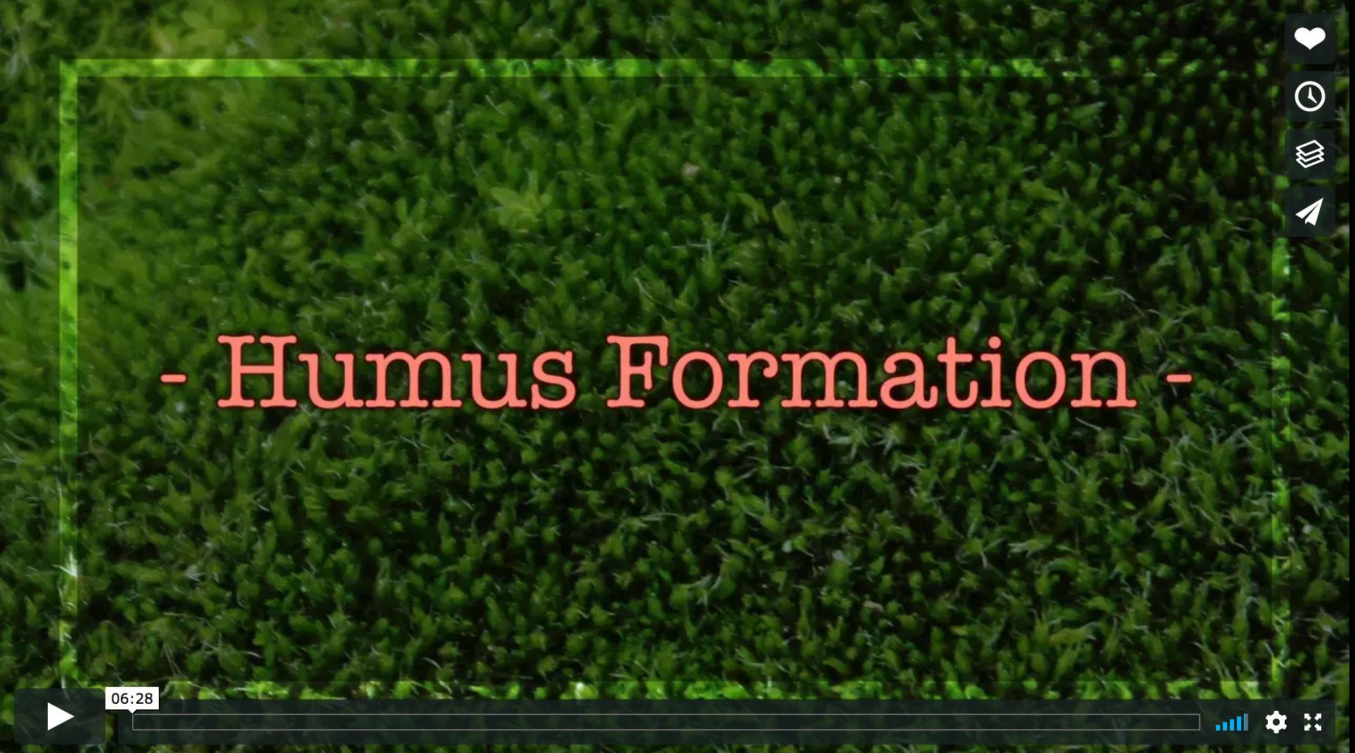 Humus Formation