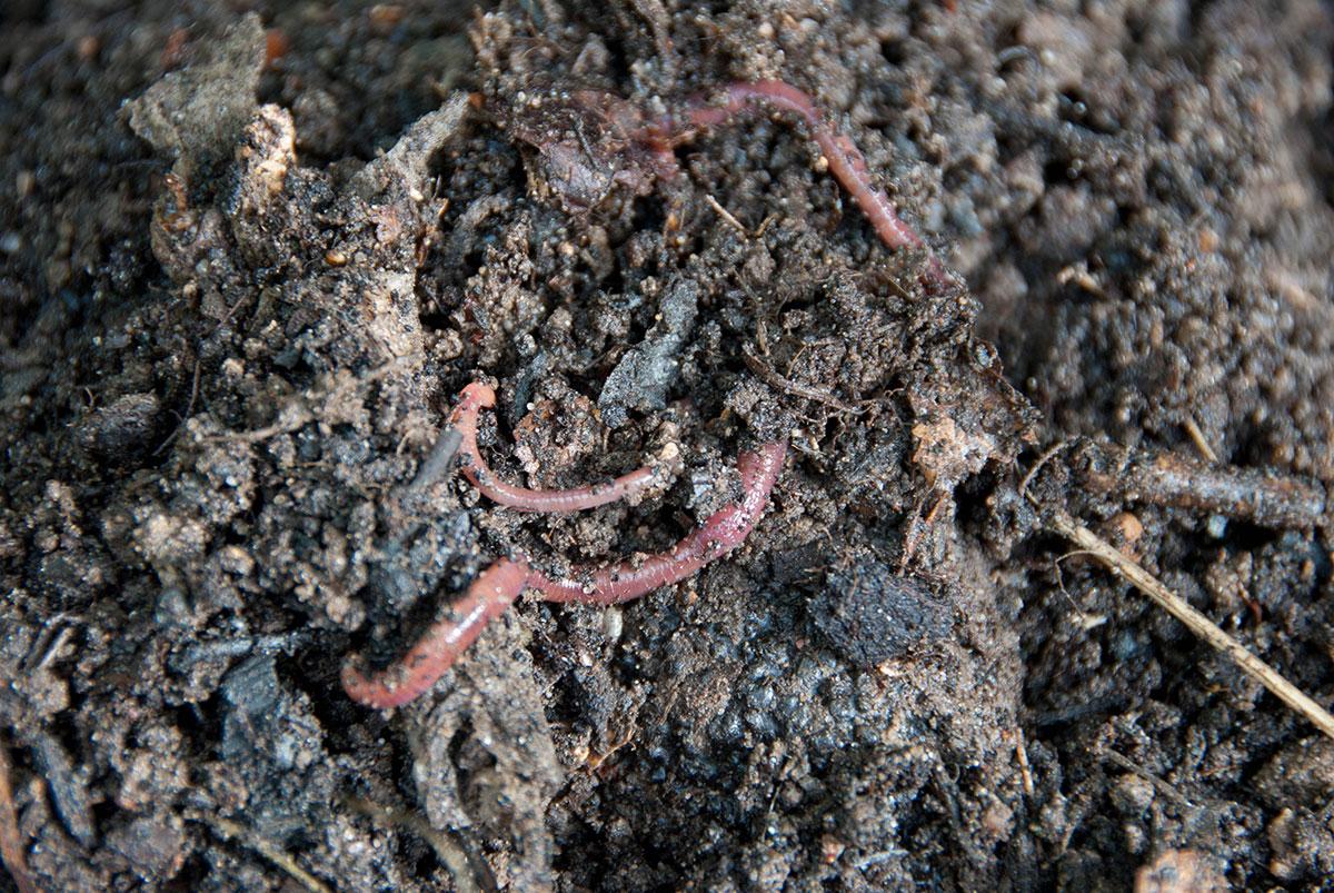 kompostorme i bokashi-kompost